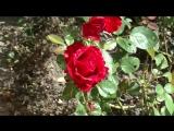 Наталья Андреева сажает цветы
