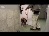 Собака Франн снова ходит благодаря своему другу