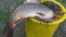 Рыбалка Ловля карпа, карася на три разные снасти. My fishing