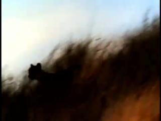 Video_Activities_2_cheetah_vs_gemsbok_med.mp4