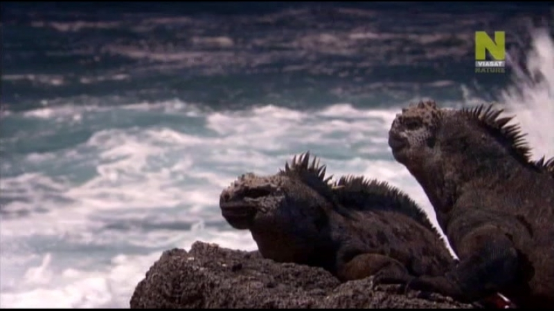 Нетронутые уголки дикой природы Natures Microworlds 01 Галапагосы