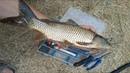 Ловля карасягибрид и карпа на поплавок Это МЕСТО для рыбалки оправдало ВСЕ свои ожидания