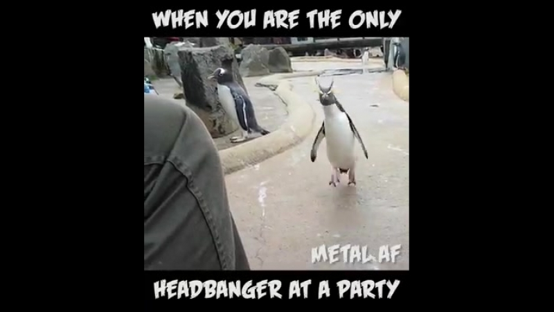 When you are the only HEADBANGER at a PARTY