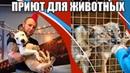 Петрозаводск - Приют для животных