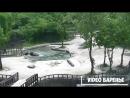 Родители спасли случайно упавшего слонёнка (VIDEO ВАРЕНЬЕ)