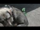 Что делать с собаками, которые конфликтуют с людьми?