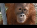 Зоопарк Лимпопо 4K
