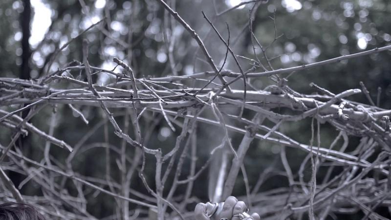 Дерево несбывшихся желаний