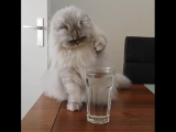 milkshake.thecat_BmT1vcrBk6v.mp4