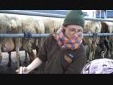 Автоматические доярки Intelligent Technology Smart Modern Farming Automatic Sheep Cow Milking Machine
