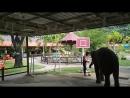 Слонёнок играет в баскетбол