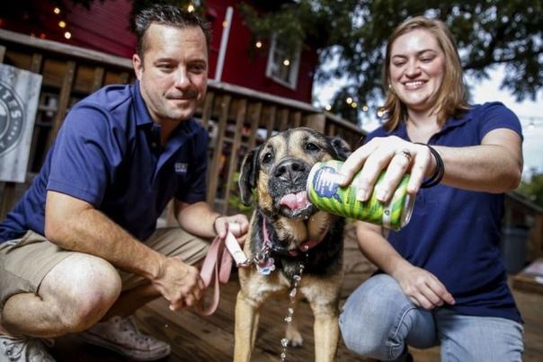 супруги открыли пивоварню, чтобы варить пенное для собак (и своего любимого пса) когда ретривер по кличке роки захандрил и наотрез отказался принимать лекарства, его хозяева, супруги стив и