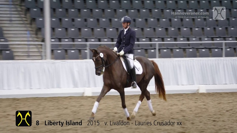 135th Elite-Auction on October 13- Training- No. 8 Liberty Island by Livaldon-Lauries Crusador xx