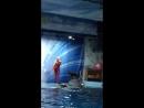Морской котик Лоло