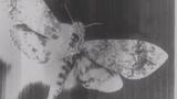 Alan Malcolm - WASD VIDEO