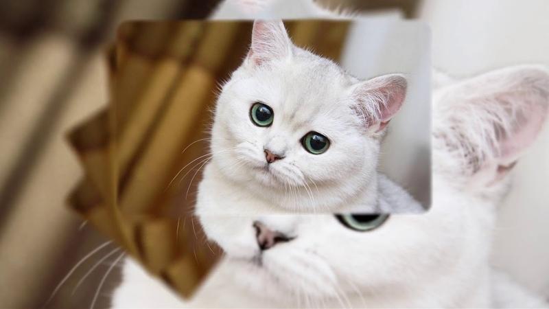 Пушистый беленький котенок