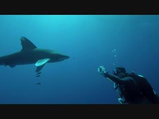 Танцы с акулами. Эпизод 1