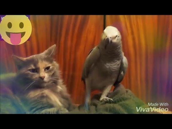 Попугай и кот попугай поёт коту🐈🐦