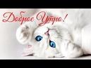 С Добрым Утром! Милое пожелание Доброго утра! Котик! Доброе Утро!