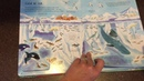 A Look Inside The Usborne See Under the Sea Flap Book