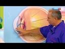Острый приступ глаукомы: как избежать внезапной слепоты