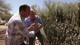 Arizona Cactus Farm - America's Heartland