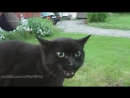 Имперский марш в исполнении кошек Cats and Kittens Meowing Song Star Wars Imperial March хорошее настроение юмор коты