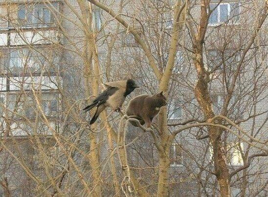Фото №456254204 со страницы Оли Новиковой
