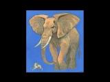 слон и моски