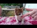 Особенный котёнок нуждается в Надёжном Любящем Доме! (15.09.18)