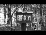 Лина в Стране Чудес - темный лес