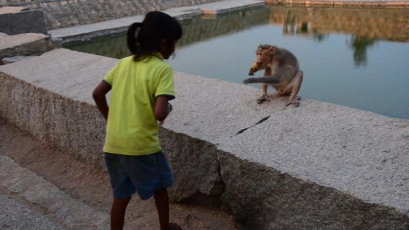 Маленькая индианка травит обезьянку в храме