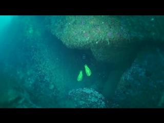 Underwater world of barents sea.