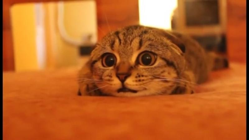 Кот обожает ужастики! .