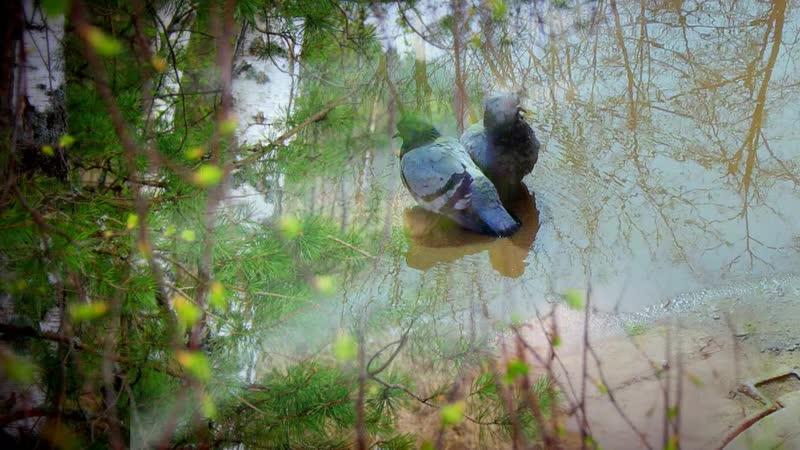 Родная земля В клипе использованы фотографии Любови Ефимцевой