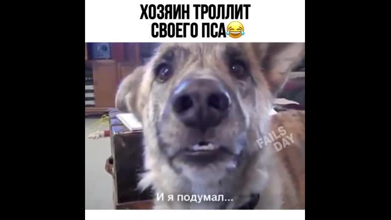 Хозяин троллит своего пса 😀