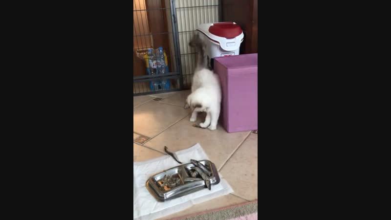Кошка Беста