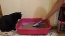 Отзыв об ароматизированном наполнителе Indian cat litter для кошачьего туалета