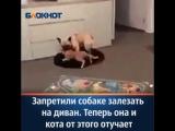 Запретил собаке залезать на диван