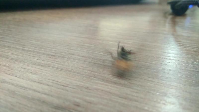 муха на максималках