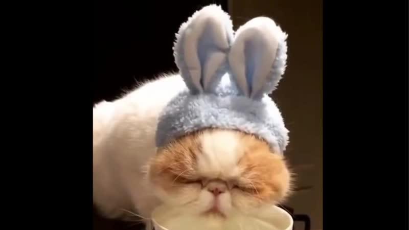Так вот ты какой, САМЫЙ ленивый кот.))