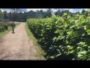 Прогулки на самокате 🛴💙