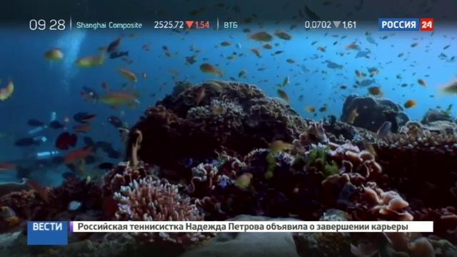 Новости на Россия 24 • Китай ввел запрет на изделия из кораллов