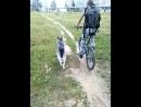 бакс на вело прогулки