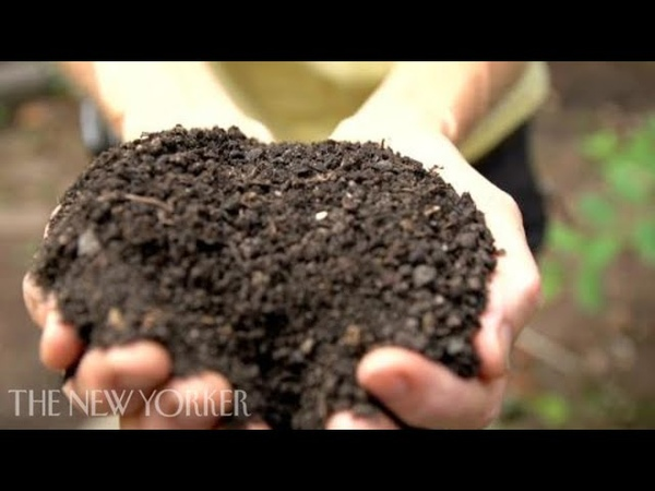 Composting in New York City - Notes From All Over - The New Yorker