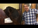 Люблю лошадок!