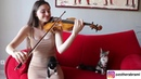 Kitten's Reaction To Me Playing The Violin!