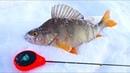 В ТАКОЙ МОРОЗ ЛУЧШЕ ИЗ ПАЛАТКИ НЕ ВЫЛЕЗАТЬ Рыбалка на безмотылку