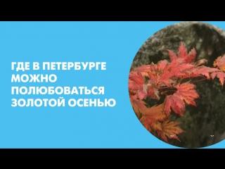Где в Петербурге можно полюбоваться золотой осенью