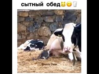 Самое свежее молоко